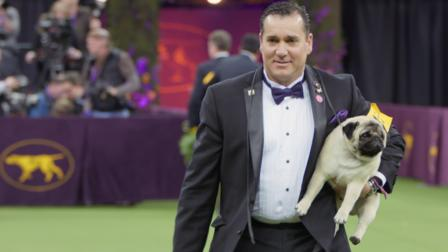 Watch Westminster Dog Show. Episode 1 of Season 1.