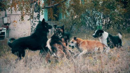 Watch Pack Hunters. Episode 5 of Season 1.