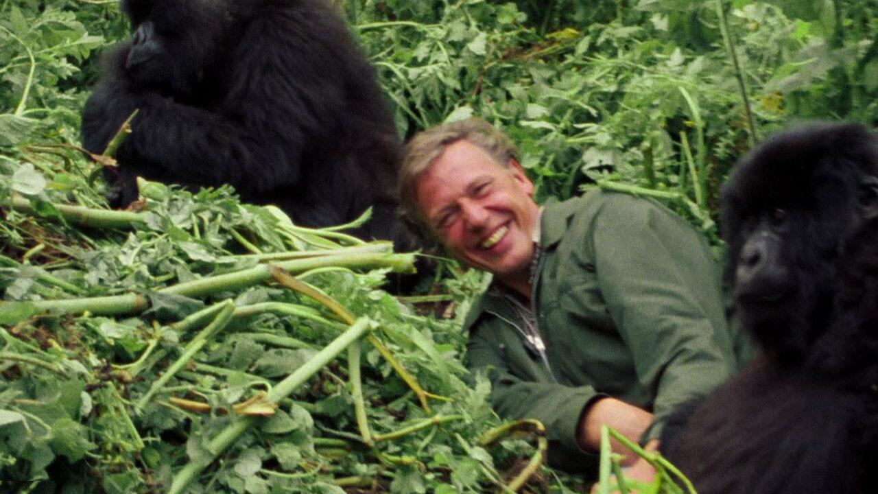 David Attenborough Una Vida En Nuestro Planeta Sitio Oficial De Netflix